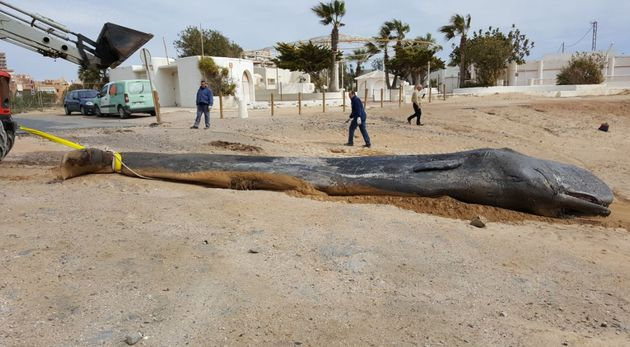 The young male sperm whale was found dead off the coast of southeast