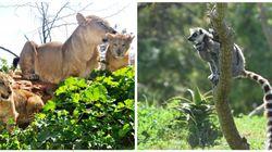 Des nouvelles naissances au jardin zoologique de