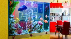 Mann macht das Aquarium sauber – und bringt damit seine ganze Familie in