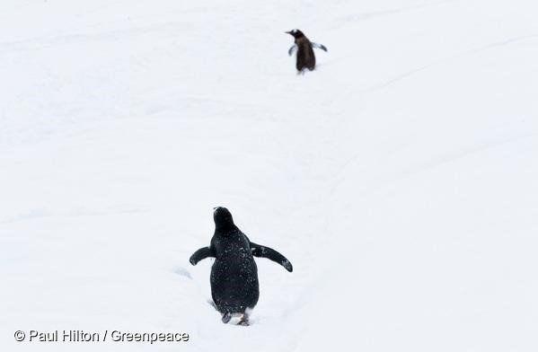 [류준열 기고글] 남극에도 봄이