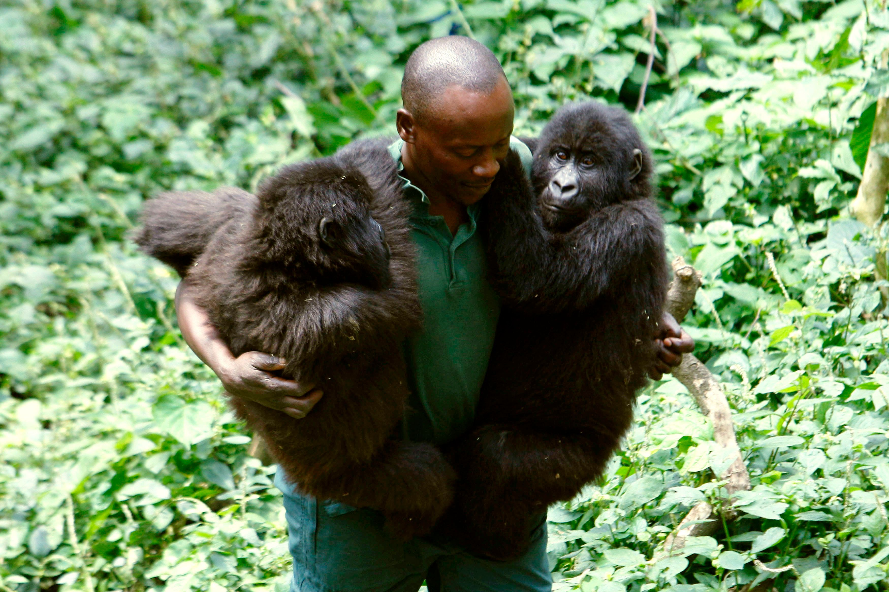 Rebels kill rangers in oldest gorilla sanctuary