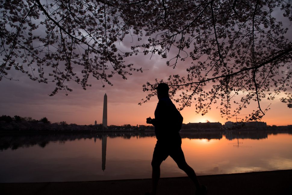 A man jogs past the cherry blossom trees as they bloom around the Tidal Basin.