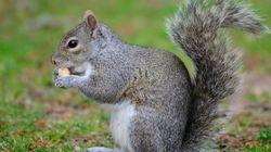 Familie rettete 2009 ein Eichhörnchen – nun kratzt es an der