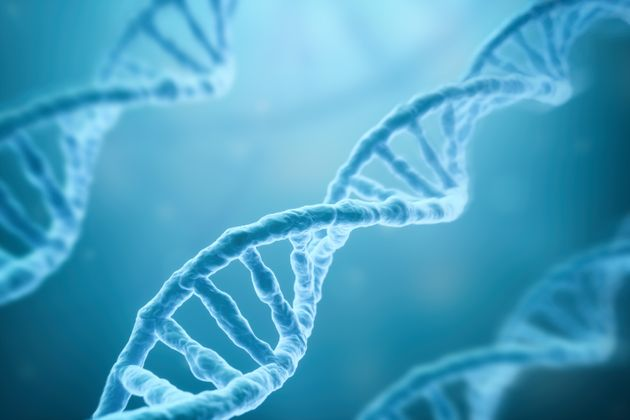 Alzheimer's Gene Is Neutralised In Human Brain Cells For The First