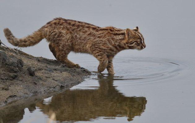실수하면 물에 빠진다. 물이 싫지만 어쩔 수 없다. 확실히 하기 위해 물속으로 한걸음 더 나아가 거리를