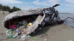 죽은 고래 뱃속에서 쓰레기 29kg이