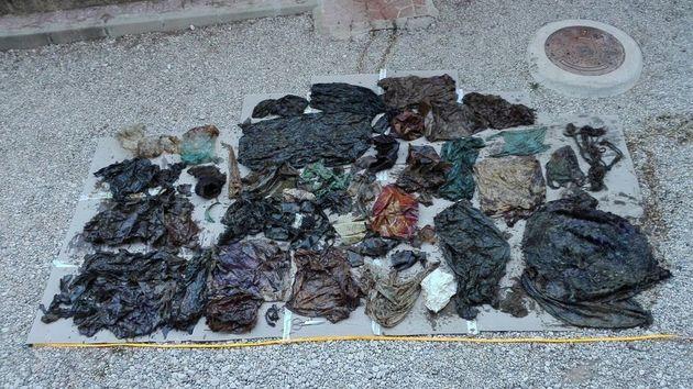 젊은 수컷 향고래의 뱃속에서 나온 29㎏ 무게의 플라스틱