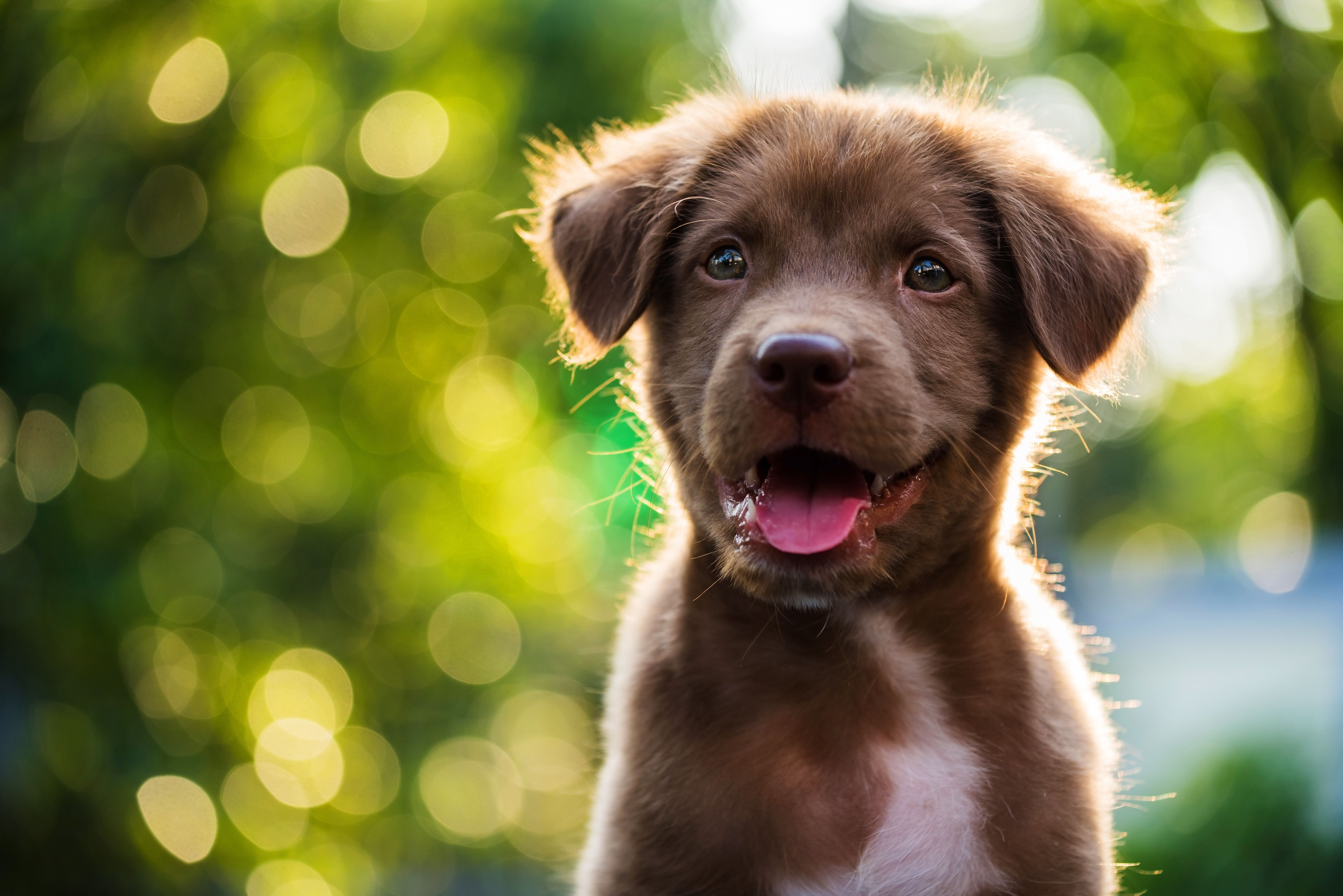 People Are Sharing Adorable Photos Of Furry Friends For National Pet