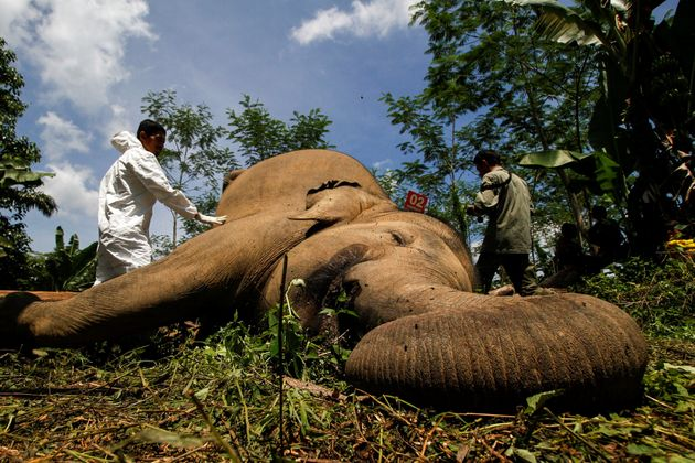 The UK Needs The Ivory Ban