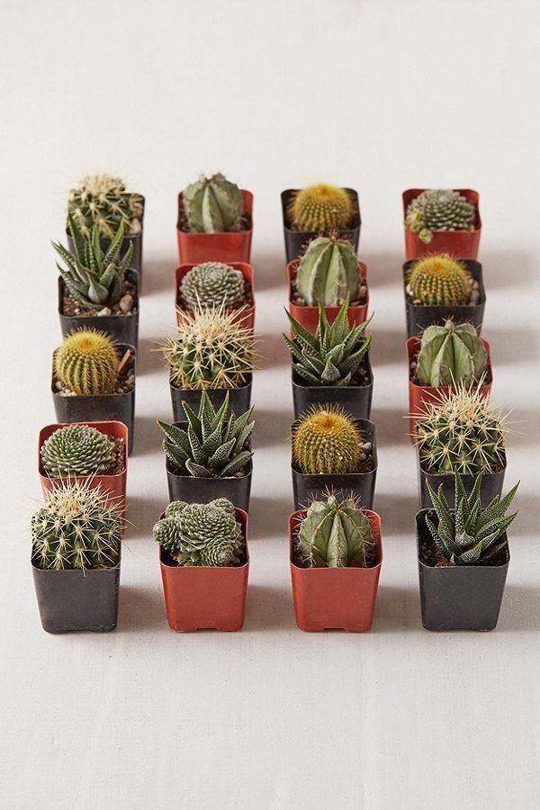 "Plants will instantly add some brightness to your place. Get a set of 20 succulents at <a href=""https://www.urbanoutfitters.c"