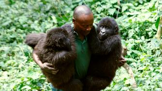 A park ranger carries orphaned female mountain gorillas Ndeze and Ndakasi at a protected location at Rumungabo in Virunga National Park just north of the eastern Congolese city of Goma, August 17, 2010. REUTERS/Finbarr O'Reilly (DEMOCRATIC REPUBLIC CONGO - Tags: ENVIRONMENT ANIMALS IMAGES OF THE DAY)