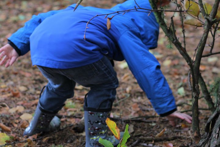 Children will be encouraged to climb trees, build dens, play games, sing songs, explore habitats.