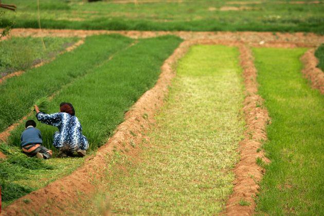 Le deuxième plus grand réservoir du Maroc s'est réduit de plus de 60% en trois