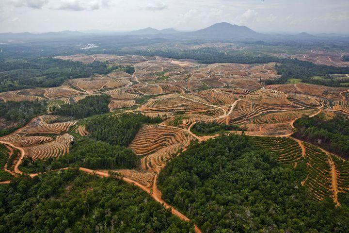 Deforestation in Central Kalimantan,Borneo.