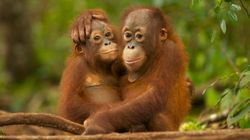 What Is Palm Oil And Why Is It Bad For The