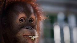 No basta con prohibir el aceite de palma en los