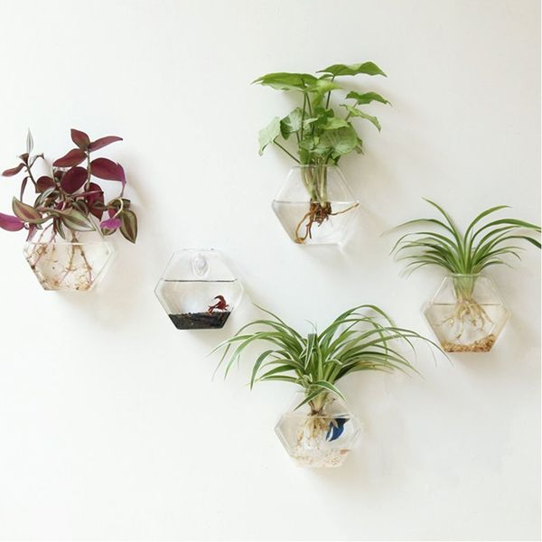 These terrariums are perfect for propagating plants and water plants. Watch them grow with each passing week. Get them <