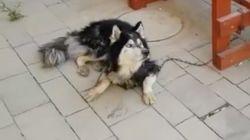 Polizei muss Hund identifizieren – dann fängt der an zu singen