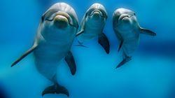 고래를 담당하는 행정부처는