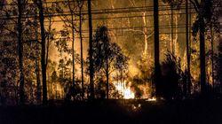 Μεγάλη δασική πυρκαγιά απειλεί κατοικίες στα προάστια του