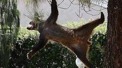 Auf Twitter kursieren Fotos von Bären, die von Bäumen fallen – das steckt dahinter