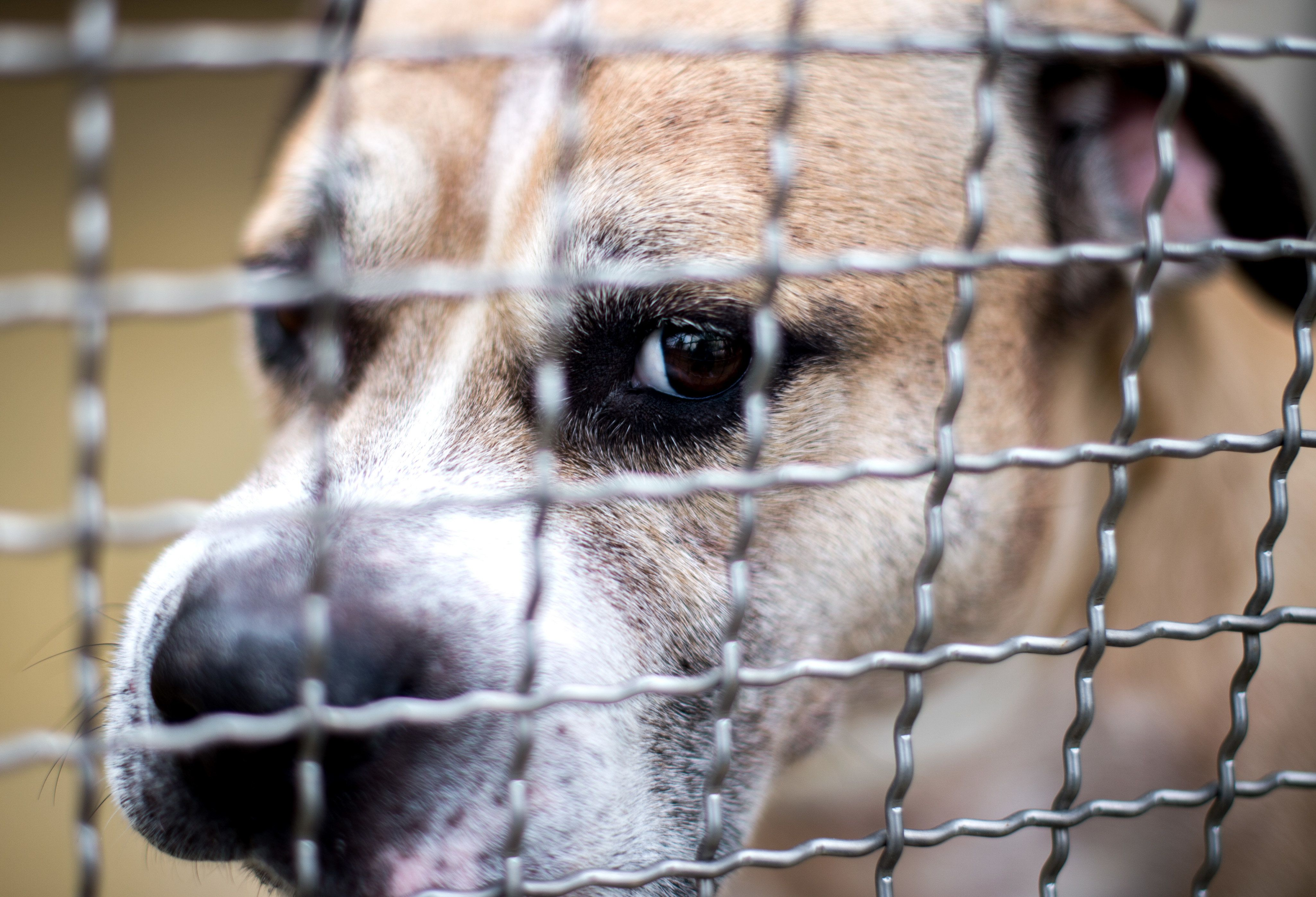 2011 bereits hatte das Veterinäramt Hinweise auf eine gesteigerte Aggressivität des Hundes und eine mangelnde Eignung des Halters erhalten.