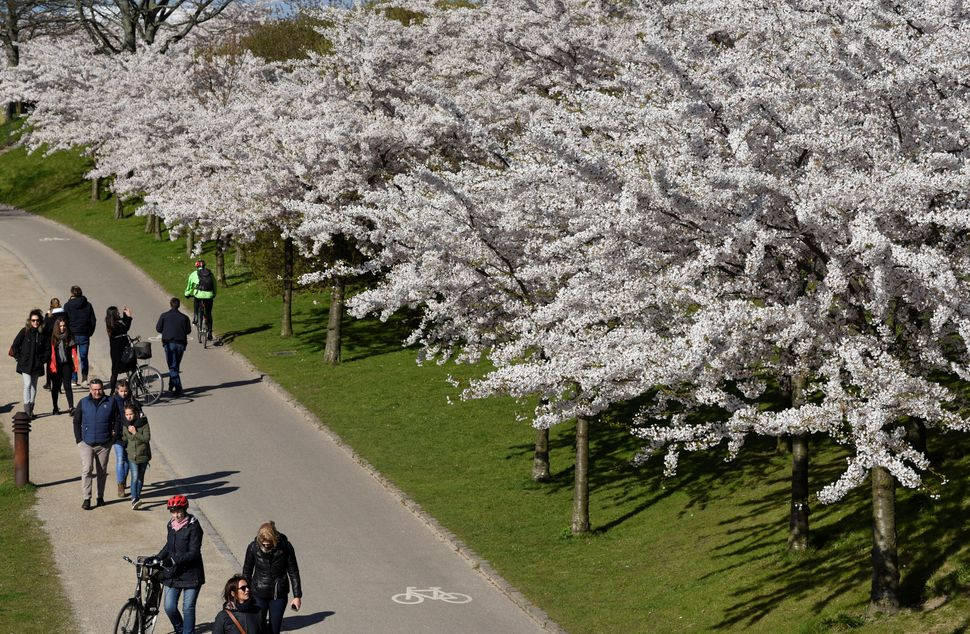 People walk under cherry blossom trees.