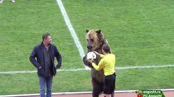 Bär muss in Russland zum Anpfiff den Fußball übergeben –Tieraktivisten sind außer