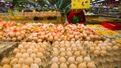 미국서 살모넬라균 공포 때문에 달걀 2억 개를