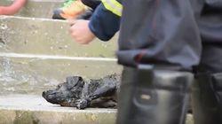 Βίντεο: Πυροσβέστες έσωσαν σκύλο από φλεγόμενο σπίτι στην