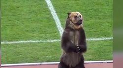 Cet ours a été forcé de jouer les mascottes pour un match de foot en