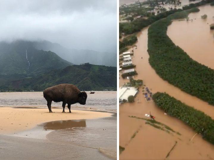 Historic Rains Devastate The Hawaiian Island Of Kauai