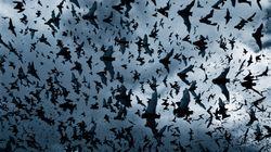 Εκπληκτικές εικόνες: Ένα «ηφαίστειο» από νυχτερίδες εκρήγνυται στο