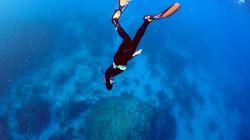 Great Barrier Reef: Jeder sollte wissen, was seit 2016 passiert ist