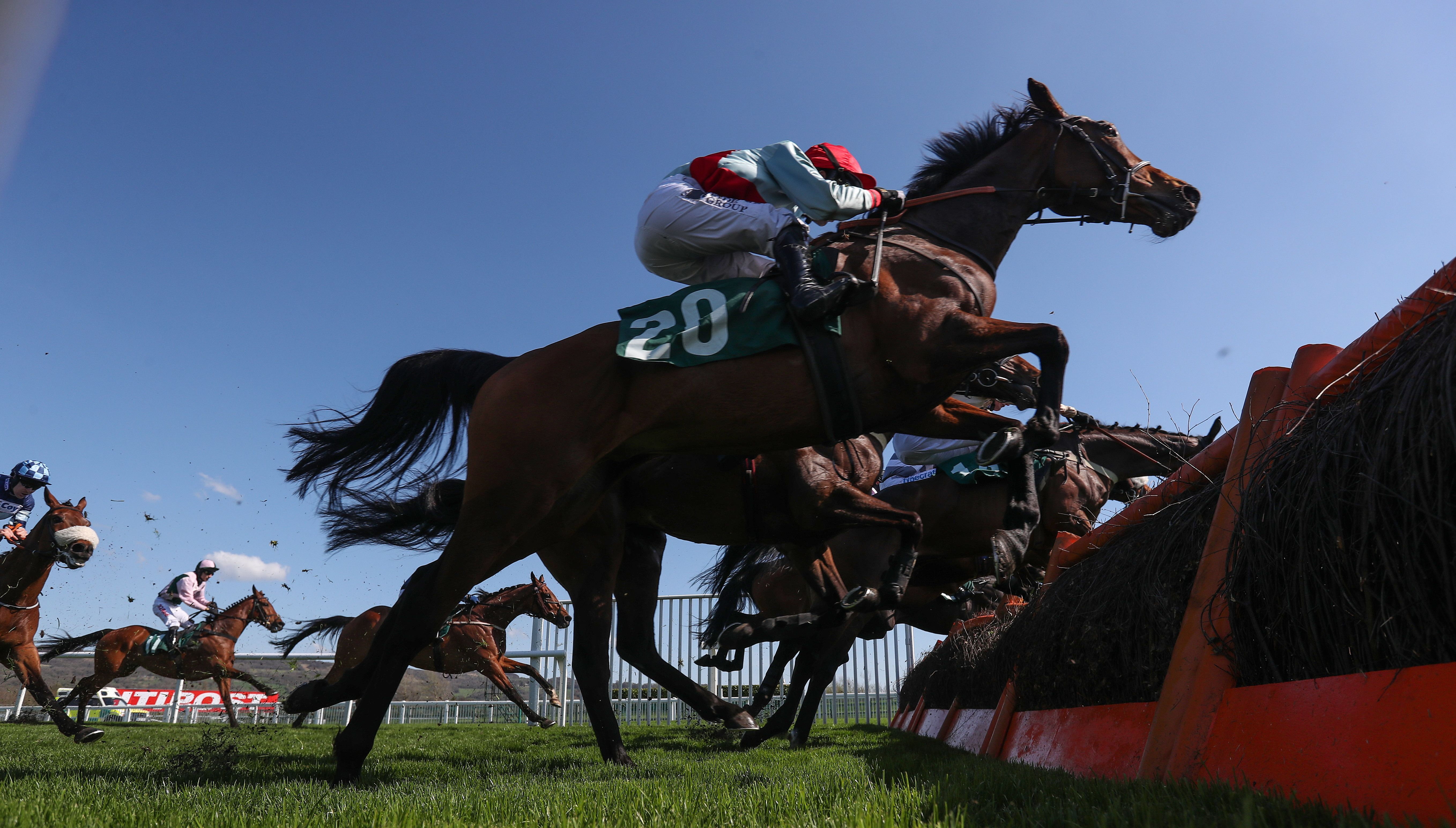 Horse Dies At Cheltenham Before Race Abandoned On Hottest Day Of The