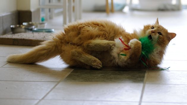 Toby enjoying a cat