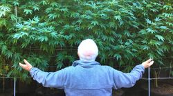 Marijuana Industry Says Seniors Are The Next Budding