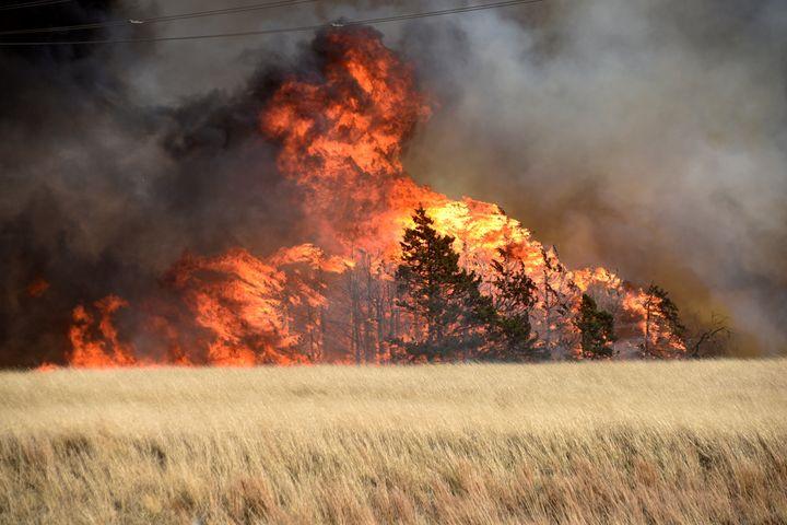The Rhea Fire burns through a grove of red cedar trees near Seiling, Oklahoma, on April 17.