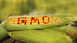 GMO 완전표시제 도입은 모두의 실패가 될