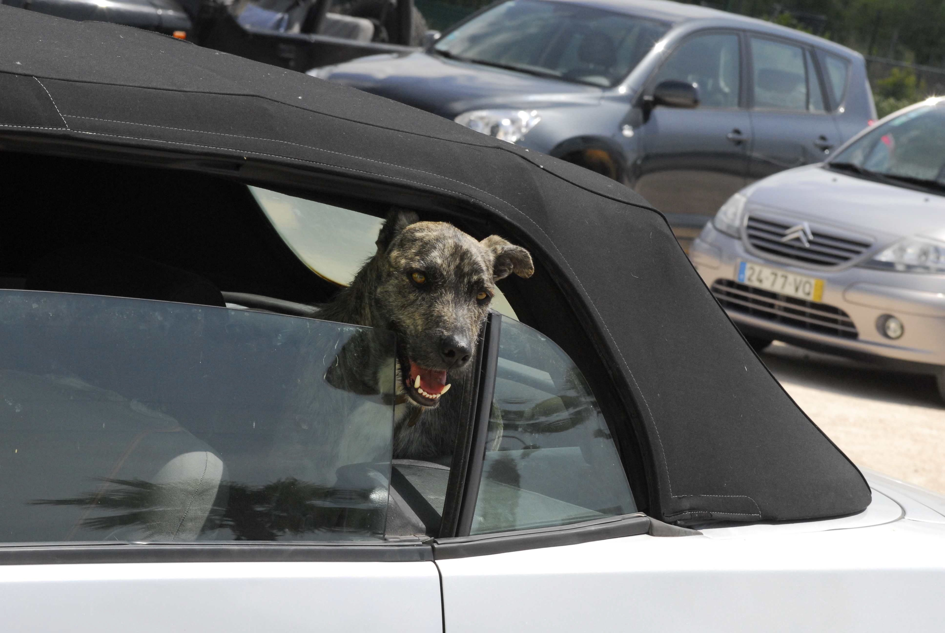 Düsseldorf: Polizei rettet Hund aus überhitztem Auto  – dann eskaliert die Situation