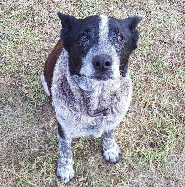 Dreijährige wird vermisst – dann kommt ein tauber und nahezu blinder Hund