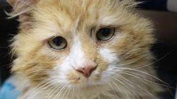 Katze läuft 20 Kilometer nach Hause – doch die Besitzer wollen sie nur töten