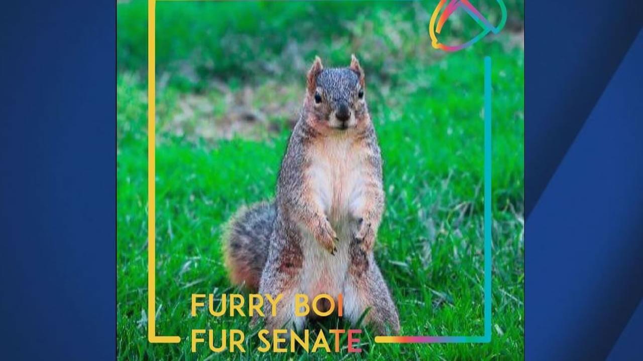 Furry Boi