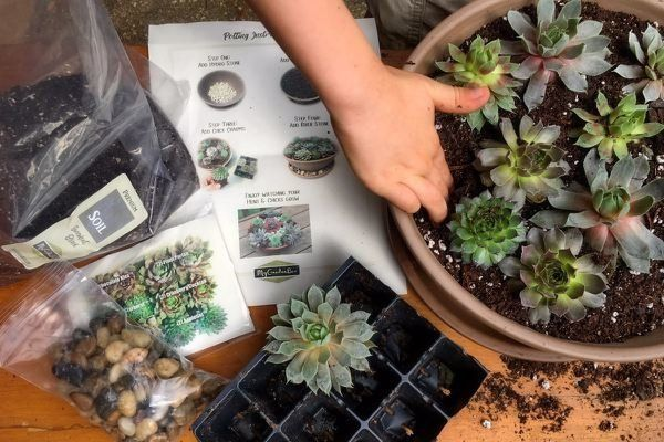 """Get a monthly subscription at <a href=""""https://www.cratejoy.com/subscription-box/mygardenbox/"""" target=""""_blank"""">Cratejoy</a>."""