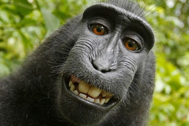 Weird Monkey Pictures 10