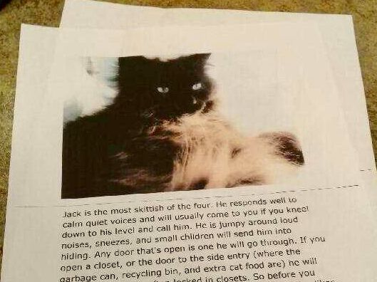 'She's A Puker': Woman Prints Hilarious Descriptions Of Her Cats For