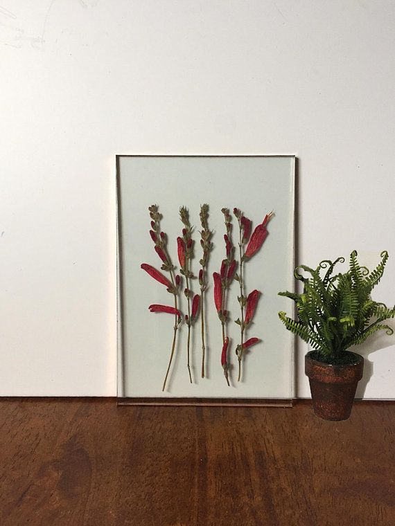 "Framed plants, or <a href=""https://www.huffingtonpost.com/entry/herbariums-dried-floral-arrangements_us_5a9d7fd4e4b0a0ba4ad6a"
