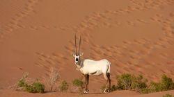Une antilope en voie d'extinction abattue puis égorgée dans une réserve à