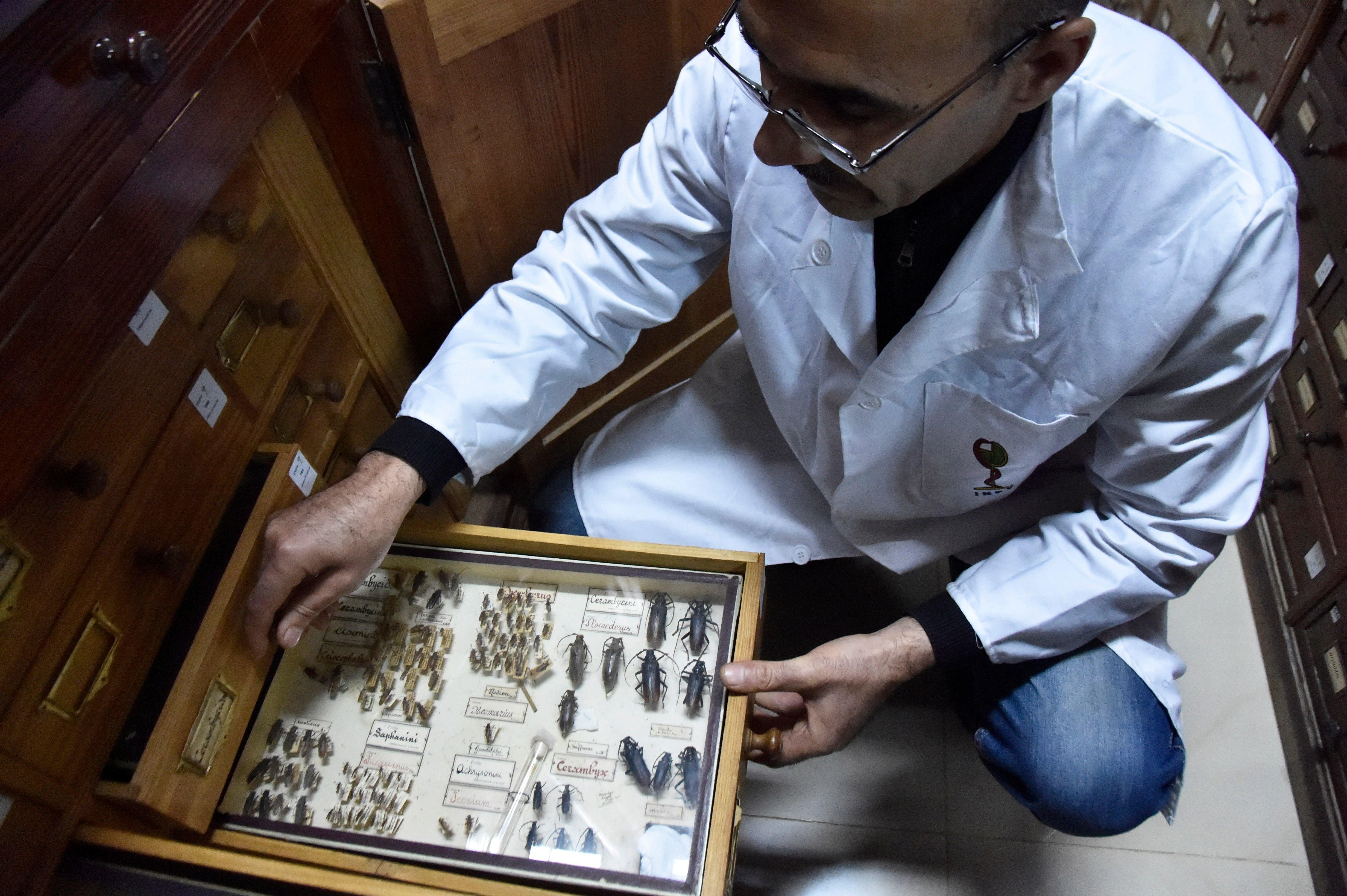 L'insectarium d'Alger à la pointe de la lutte contre les