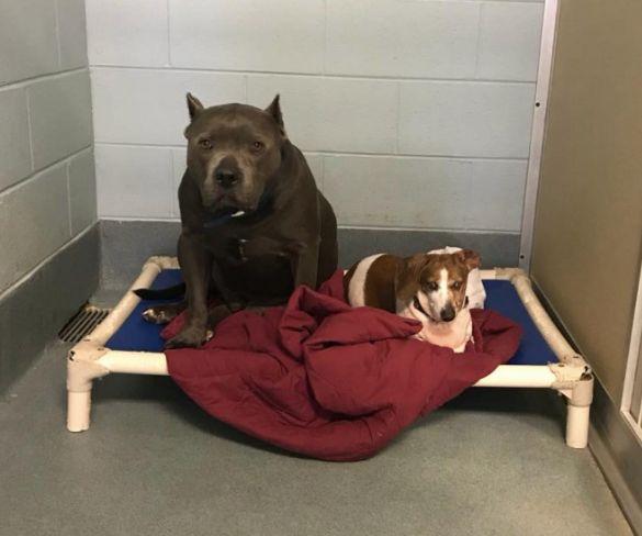 Frau rettet Hunde aus Tierheim – die Pfleger wünschten, sie hätte es nie